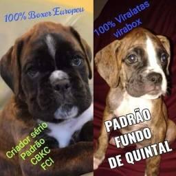 Vai no Kennel club de Goiás pedir informações