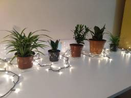 Vendo plantas de diversas espécies