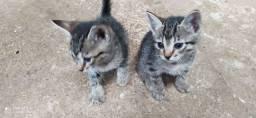 Doa se essas 4 gatinhas.