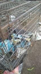 Vendo gaiola galvanizado