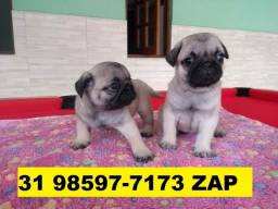 Canil Filhotes Cães Pet BH Pug Yorkshire Maltês Bulldog Beagle Shihtzu Lhasa