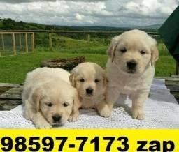 Canil Filhotes Cães Premium Golden Labrador Akita Boxer Dálmata Pastor
