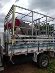 Transporte Animais