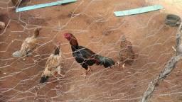 Vende se galinhas caipiras