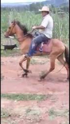 Égua Marchadeira
