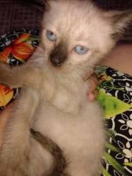 Doação de gato + 1kl de ração