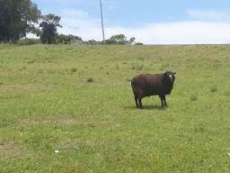Título do anúncio: 68 hectares a 7 km da BR 290