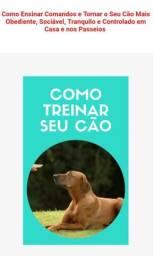 Como treiná seu Cão