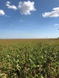 Fazenda Região São Joaquim MT | 190 Alqueires | Plana | Analisa prazos