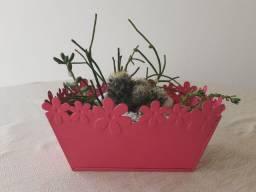 Vaso jardineira cacto suculenta flor
