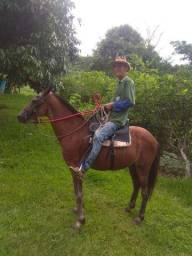 Cavalo Arriado