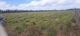 Terra 20 hectares no canta galo