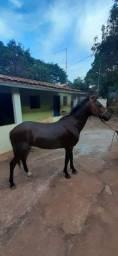 Cavalo manga larga 5 anos e 7 meses
