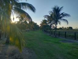 Dupla aptidão 348 hectares 50% aberto em Porto velho