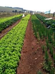 Vendo verduras frescas e muito bem cuidadas