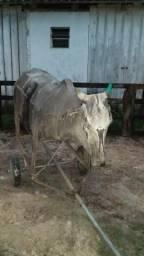 Vendo vaca mecânica