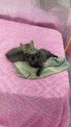 Doam se dois lindos gatinhos
