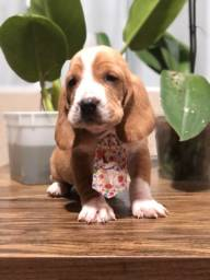 Machinho de Basset Hound