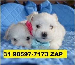 Canil Filhotes Top Cães BH Maltês Beagle Yorkshire Poodle Basset Pug Shihtzu Bulldog