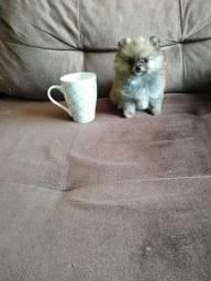 Lulu Minusculo 3 meses