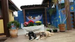 Hotel para cães e gatos / banho e tosa