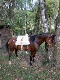 Cavalo de monetária