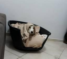Cestinha para cachorro