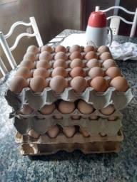 Ovos de gigantes negro