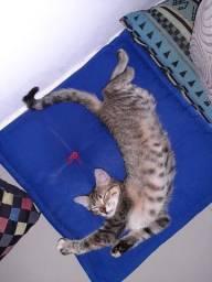 Doa-se uma linda gatinha
