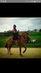 Cavalo bueno