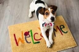 Hospedagem e passeio de cães