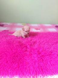 Poodle Feminha Super Micro