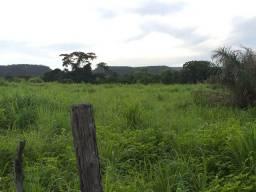 Fazenda 90 hectares em Amarante