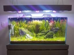 Aquário Plantado 80x40x35cm 110 litros Completo com móvel, filtro, Co2 e iluminação led
