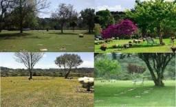 Jazigo Cemitério Parque Iguaçu - R$ 9.000