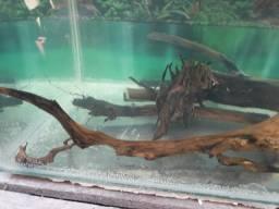 Troncos e raízes para aquário plantado ou comunitário