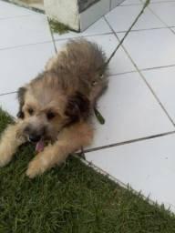 Cachorro York share com podol