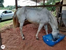 Cavalo de sela e charrete