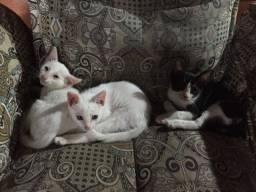Gata fêmea para adoção (branca e preta/branca)