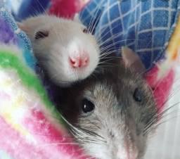 Doa-se ratinho twister (Mecol)