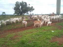 Fazenda 243 hectares, aceita troca