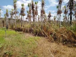 Fazenda em Canindé 600 hectares açude,poço com vazão de 40 mil LH, muita croa, curral