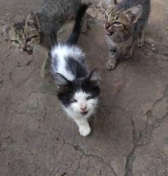 Gatinhos para adoção!!!