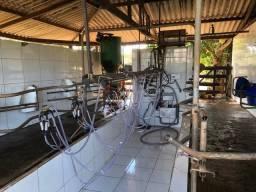 Ordenha e tanque de leite