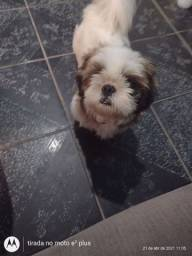 Cachorro macho 8 meses