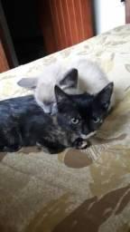 Doação gatinhos, gatos, filhotes