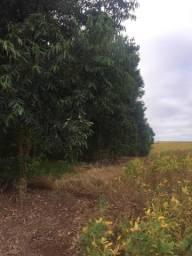 Sítio 6,5 alqueires na cidade de Luiziana
