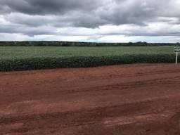 Arrendo fazenda para plantio de soja em Caseara-TO