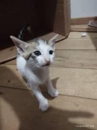 5 gatinhos para adoção