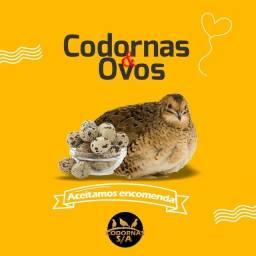CODORNAS
